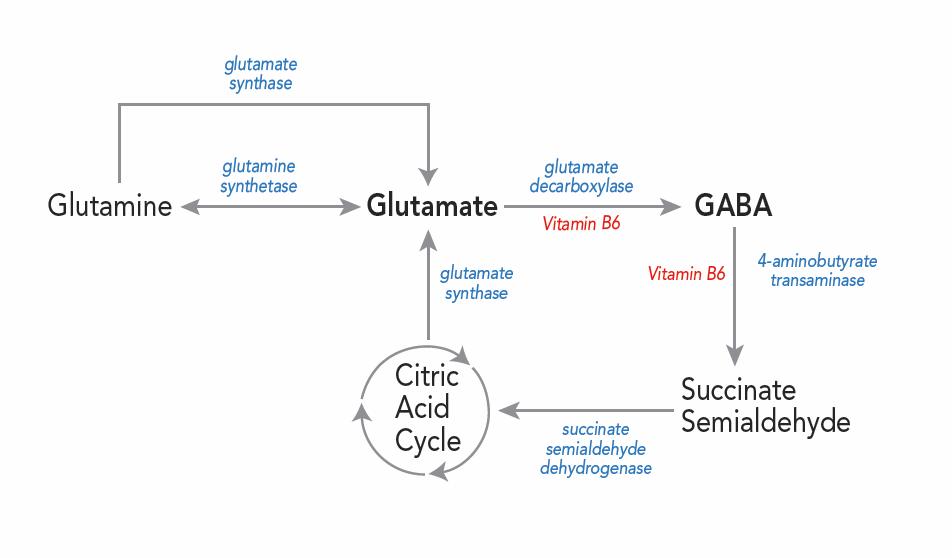gaba-glutamate